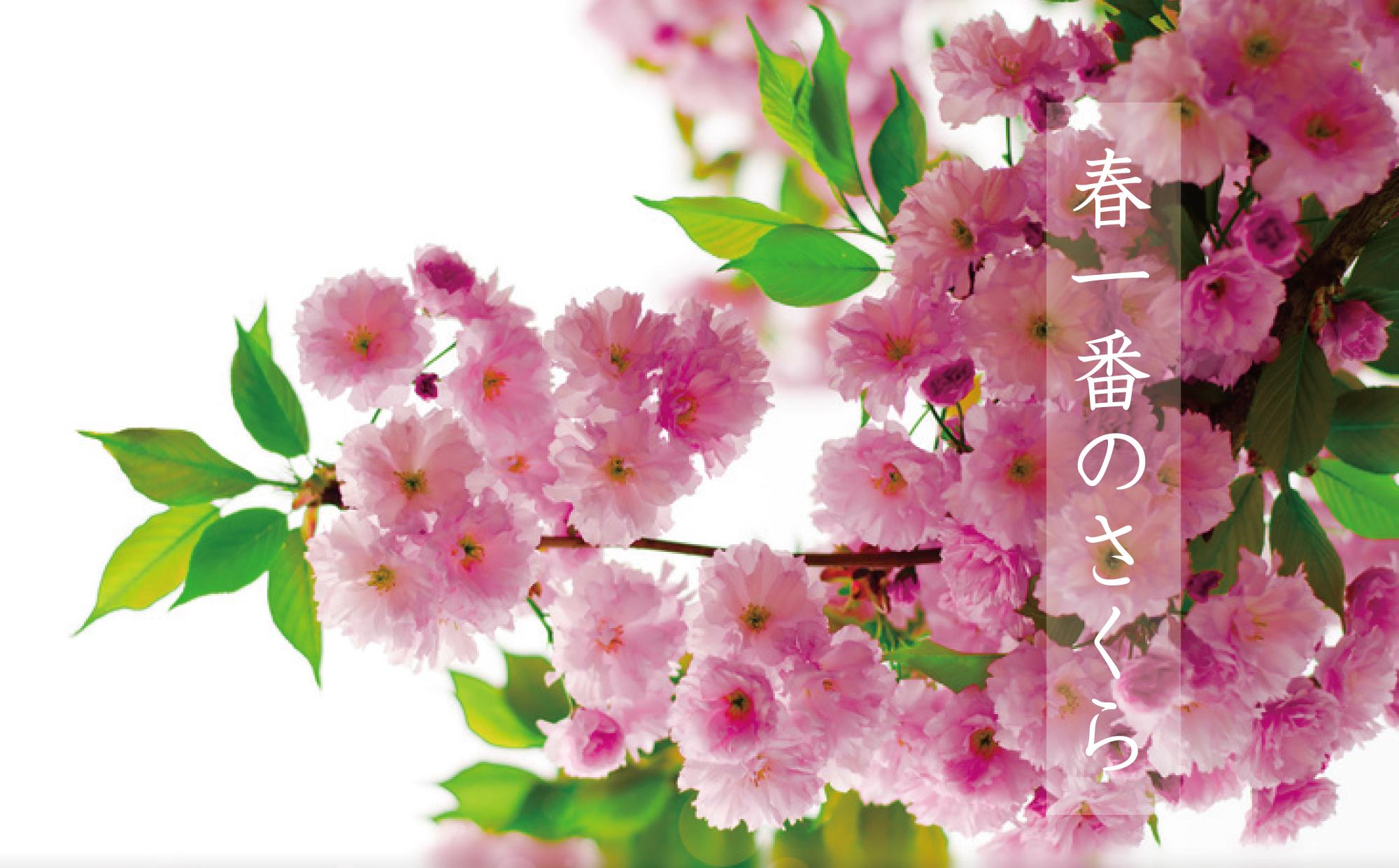 桜コンテンツ管理画像02